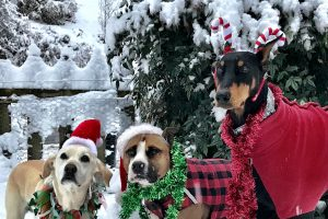 Dogs in winter holiday costumes