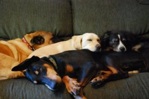 4 dogs on couch