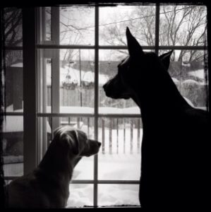 Dogs looking out window